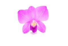 härlig orchidviolet Royaltyfri Fotografi