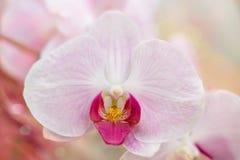 Härlig orkidé Arkivbild
