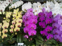 Härlig orkidé Arkivfoton