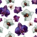 Härlig orkidé flower2 Royaltyfri Bild