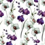 Härlig orkidé flower7 vektor illustrationer