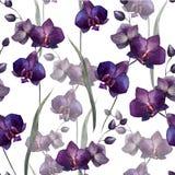 Härlig orkidé flower4 stock illustrationer