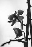 Härlig orkidé i fönster med mjuk slät bakgrund Arkivfoto