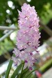 Härlig orkidé på suddig bakgrund, selektiv fokus Royaltyfri Fotografi