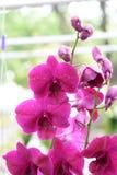 Härlig orkidé på suddig bakgrund, selektiv fokus Arkivfoton