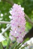 Härlig orkidé på suddig bakgrund, selektiv fokus Arkivbild
