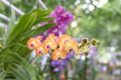 Härlig orkidé på suddig bakgrund, selektiv fokus Arkivbilder