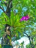 Härlig orkidé som växer, genom att bo på ett stort träd royaltyfri foto