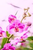Härlig orkidéblom i morgonen arkivbild