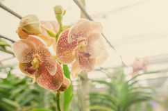 Härlig orkidéblom i morgonen arkivbilder
