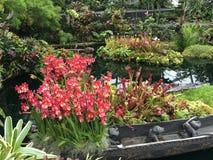 Härlig orkidéblommakupol Royaltyfria Foton