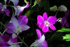 Härlig orkidégrupp Arkivbild