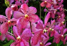 Härlig orkidégrupp Royaltyfri Bild