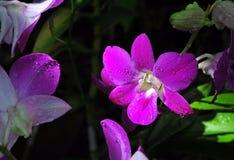 Härlig orkidégrupp Arkivfoto