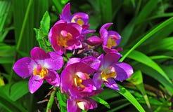 Härlig orkidégrupp Royaltyfria Bilder