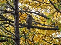 Härlig owl royaltyfri bild