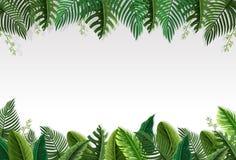 Härlig palmbladgräns royaltyfri illustrationer