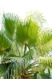 Härlig palmträd Royaltyfri Fotografi