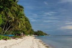 Härlig palmträd fodrad vit sandstrand Royaltyfri Foto