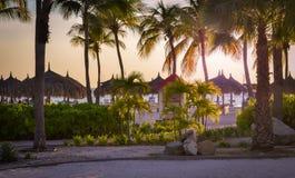 Härlig palmträd som skjutas på Palm Beach i Aruba Arkivbild