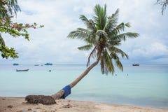 Härlig palmtree på stranden Royaltyfri Foto