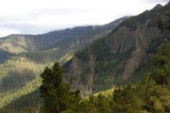 Härlig panorama av pinjeskogen med solig sommardag Barrträd Hållbart ekosystem teide tenerife arkivbild