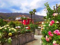 Härlig panorama, fjädrar blommande rosor i regionen Piedmont, Stresa, nordliga Italien royaltyfri fotografi