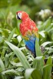 härlig papegoja royaltyfri fotografi