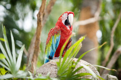härlig papegoja arkivfoton
