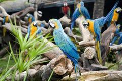 härlig papegoja royaltyfria bilder