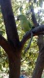 Härlig papegoja i träd Royaltyfri Fotografi