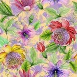 Härlig passionblommapassiflora på klättring fattar med sidor och rankor botanisk bakgrund seamless blom- modell Arkivfoto