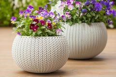 Härlig pensésommar blommar i blomkrukor i trädgård Royaltyfria Bilder