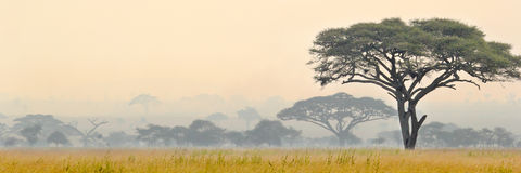 Härlig plats av den Serengeti nationalparken fotografering för bildbyråer