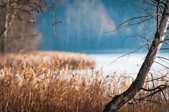 Härlig plats av nedgången med björken i förgrund. arkivfoton