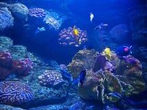 Härlig plats av Undersea Coral Reef med havsfisken Arkivfoton