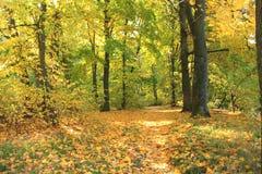 Härlig plats för höstskognedgång höstlig härlig park greenwood Arkivbild