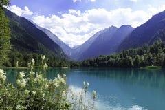 Härlig plats från sjön, skog och berg i Salzburg, Österrike Royaltyfri Foto