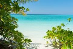 Härlig plats i Indiska oceanen med växter på stranden Royaltyfri Bild