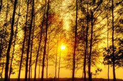 Härlig plats i skog med solen Arkivfoto