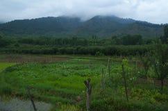 Härlig plats nära Pahalgam Royaltyfri Foto