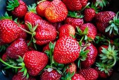 Härlig platta med nya söta jordgubbar En ljus radda, är nya bär av en jordgubbe Arkivbild