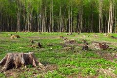 härlig pristine deforestationskog för områden fotografering för bildbyråer