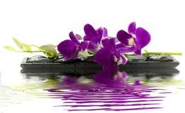 Härlig purpur orchid Arkivfoto