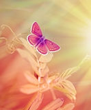Härlig purpurfärgad fjäril på vårgräs arkivfoton