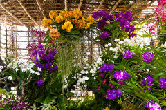 Härlig purpurfärgad orkidé Royaltyfria Bilder