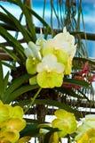 Härlig purpurfärgad orkidé Arkivbild