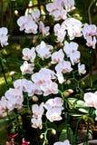 Härlig purpurfärgad orkidé Arkivfoto
