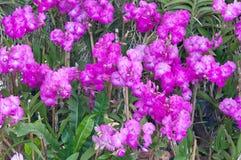 Härlig purpurfärgad orkidé på naturlig bakgrund Arkivbilder