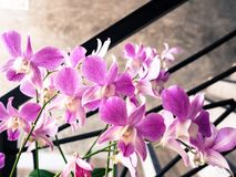 Härlig purpurfärgad orkidéblomma Arkivfoton